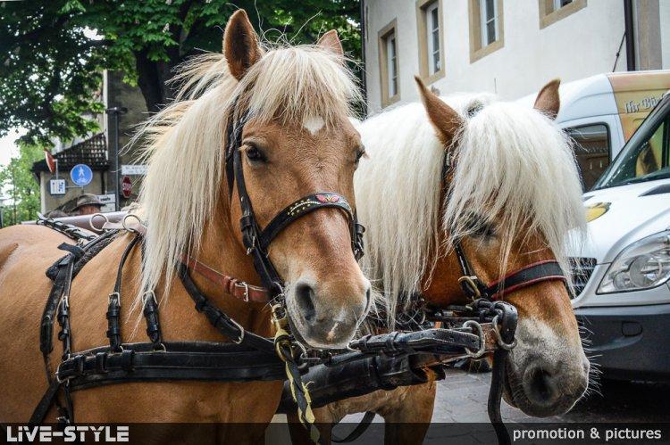 11.05.2019 - Eppaner Oktoberfest 2019